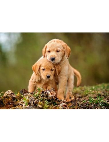 Castorland Puppy Love 500 ΚΟΜΜΑΤΙΑ B-52271