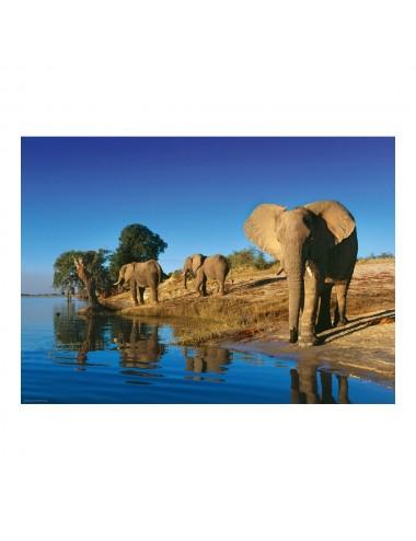 Heye Humboldt: Διψασμένοι Ελέφαντες 1000pcs